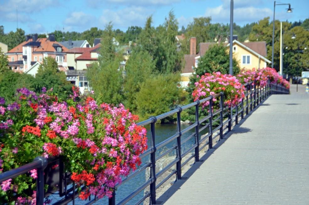 Det blommande broräcketn på Strömbron i Borensberg2014